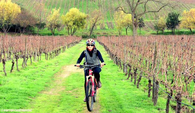 Lapostolle Residence - tour de bicicleta pelos vinhedos - Não Pira, Desopila