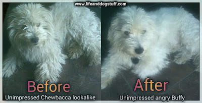 Buffy before and after dog grooming.