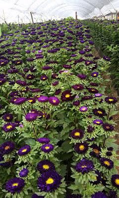 flower field photos