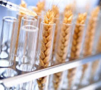 gmo cultivation drops in eu, except in spain and portugal