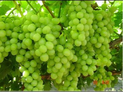 العنب الاخضر في المنام