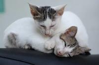 cara mengatasi penyakit pada kucing
