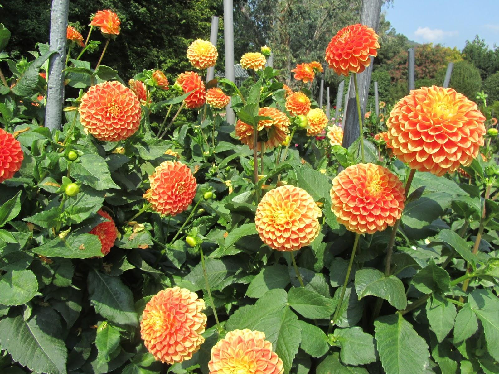 Fiori da seminare a settembre good fiori da balcone - Calendario semina fiori ...