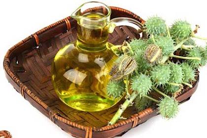 15 Manfaat minyak jarak untuk kesehatan dan kecantikan