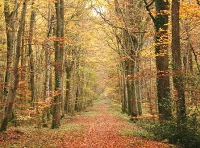 Hàng cây lá đổ