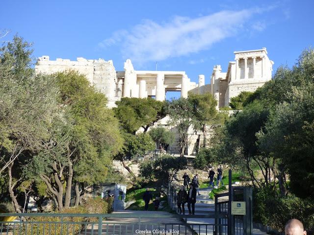 Przy bramie wejściowej na Akropol rosną drzewa oliwne, w oddali zabytkowey budynek obok turyści Ateny Grecja