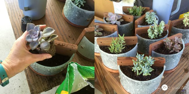 planting succulents into light fixture planters