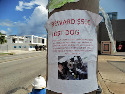 $500 reward for lost dog (self-made sign on utility post with pic)