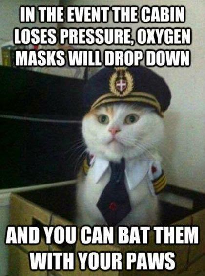 Funny Airplane Pilot Cat Emergency Announcement Joke Picture