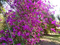 Primavera Quiosques Parque Ecológico de Barueri