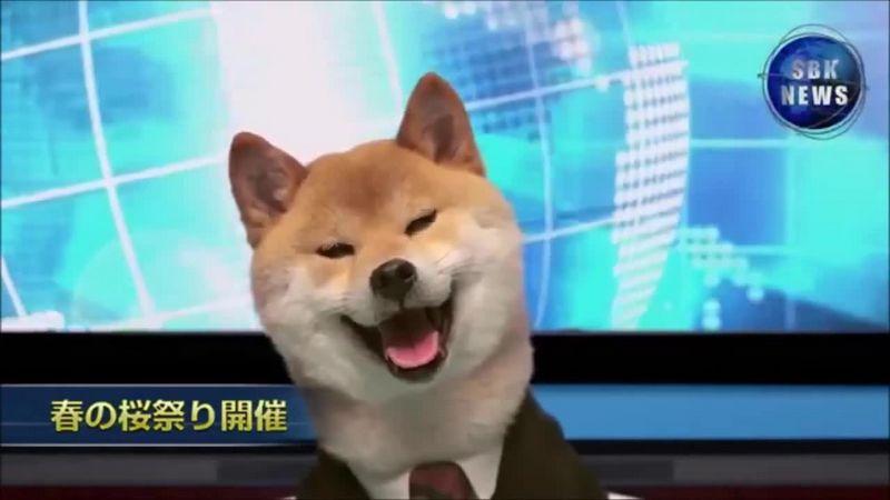 Funny Shiba Inu