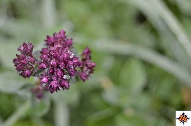 Flora lungo il sentiero natura