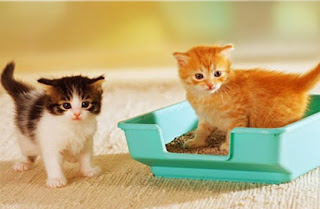 Cat Instruction Tips,Toilet Training or  Litter Box Training