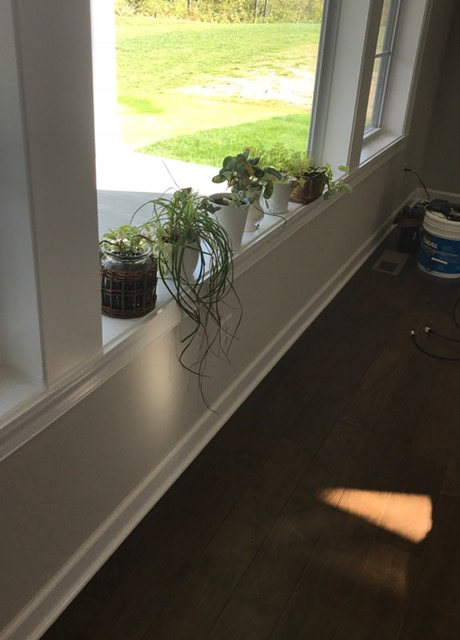 thick window sill with plants