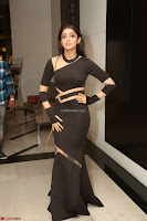 Pranitha Subhash in a skin tight backless brown gown at 64th Jio Filmfare Awards South ~  Exclusive 186.JPG