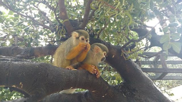 פארק הקופים בן - שמן