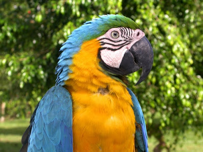 Parrots present a passel of problems for evolutionists