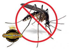 Hindari Dari Gigitan Nyamuk