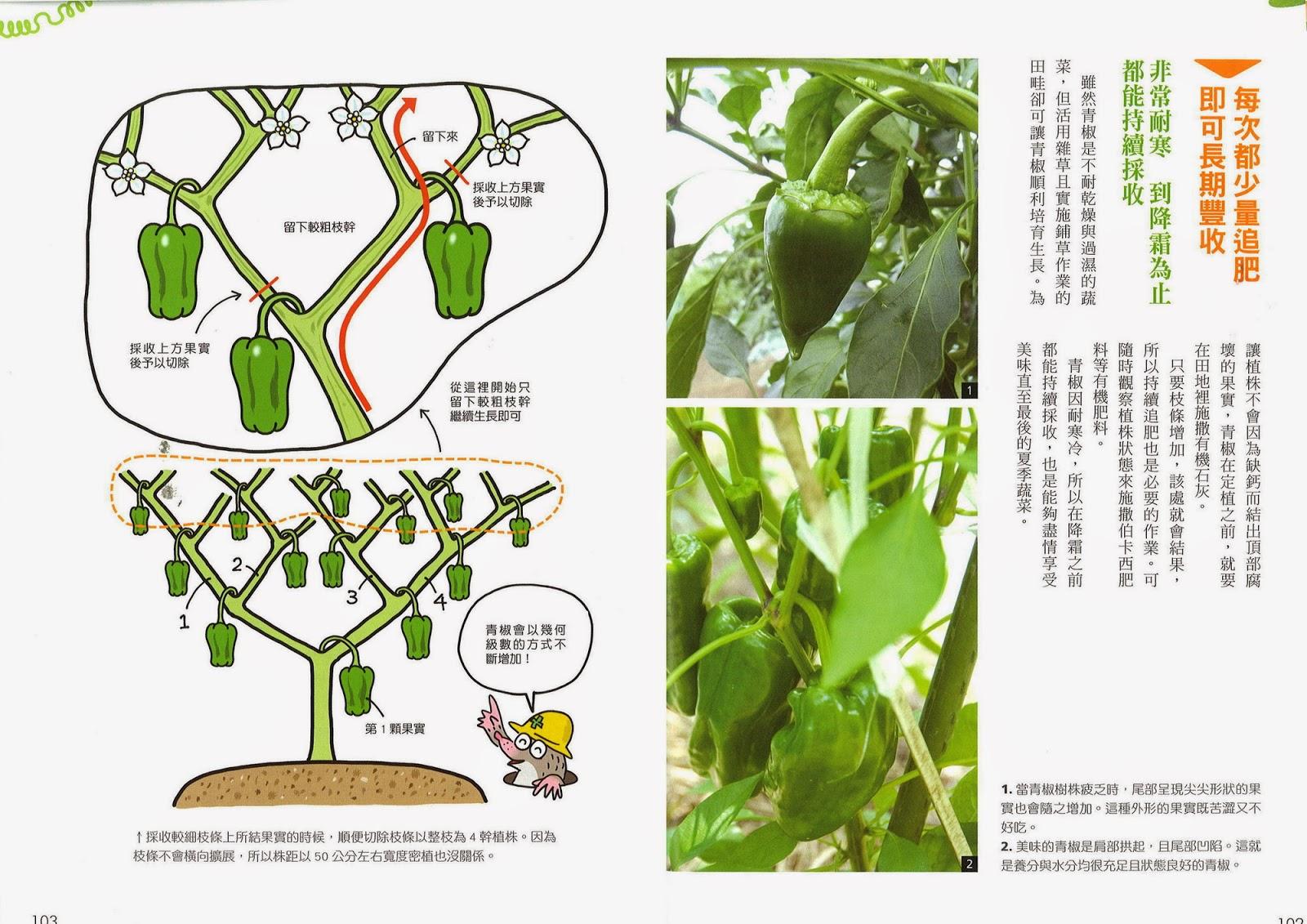 好書推薦~懶人農法 活用雜草打造無農藥的有機菜園