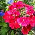Leuke kleurrijke achtergrond met rode bloemen