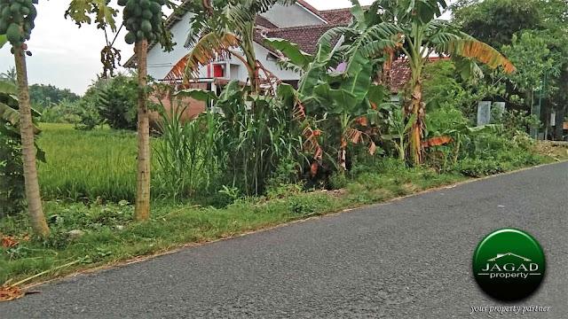 Tanah Sawah di Pendowoharjo, Bantul