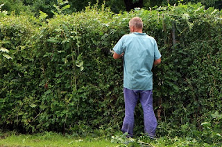 hire professional gardener
