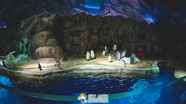 Cute penguins chilling in the cave