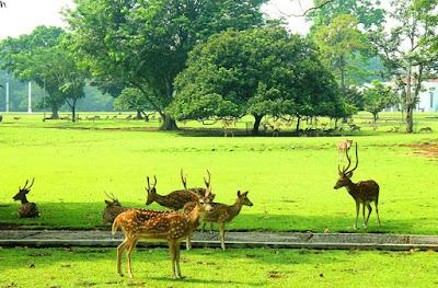 Harga Tiket Masuk Kebun Raya Bogor Terbaru