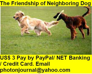 The Friendship of Neighboring Dog Book Store Buy Books Online Cash on Delivery Amazon Books eBay Book  Book Store Book Fair Book Exhibition Sell your Book Book Copyright Book Royalty Book ISBN Book Barcode How to Self Book
