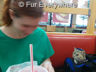 I am sitting in a Wendy's booth with Jewel.  Jewel's head is poking out of her soft cat carrier.