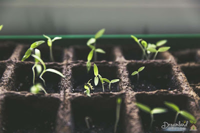 Let Kids Start Plants From Seeds