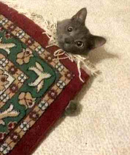 Cat under carpet