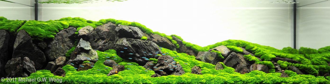 AGA 2011 - bể thủy sinh trồng một loại rêu không phổ biến ở Việt Nam