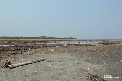槍昔の湿地 ≪Yarimukashi Marsh≫