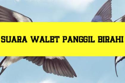 Suara Walet Terbaik -  Download suara walet birahi dan kawin Mp3