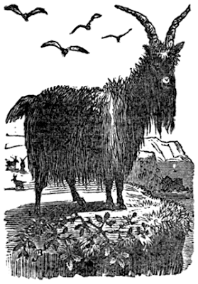 http://cornishfolkloretales.blogspot.co.uk/2017/06/lundy-hole-folklore.html