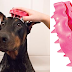 Amazon Add-On: $3.74 (Reg. $7) KONG ZoomGroom, Dog Grooming Brush, Small!
