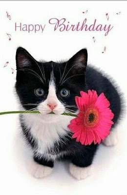 Best of Birthday Wish Images With cat Hd Quality Birthday photos download here is the best pic for Birthday With Animal