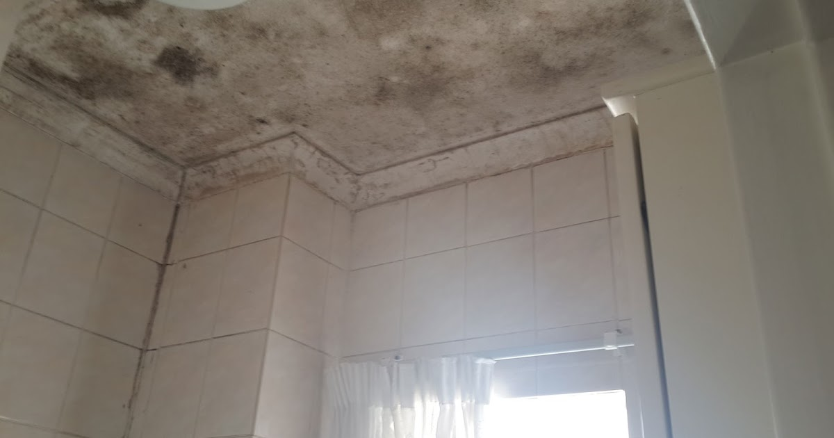for Mold removal bathroom ceiling