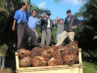 Cara Meningkatkan Kualitas dan Kuantitas Hasil Produksi Perkebunan Sawit