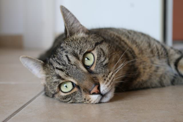 Common Causes of Drastic Weight Loss in Cats