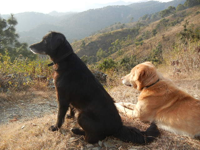 A walk with dogs in Bhimtal