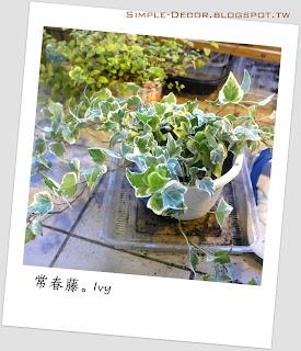 http://simple-decor.blogspot.tw/2016/03/greeny-garden-ivy.html