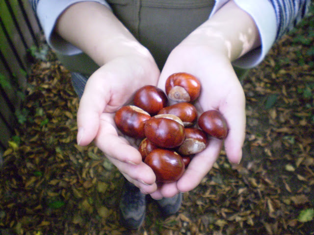 My hands full of conkers