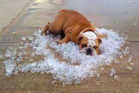 em um dia típico de verão, a temperatura no interior do automóvel salta de 35,5 para 46 graus em apenas 10 minutos, extremo que pode ser fatal para o cachorro. Deixar o vidro aberto não resolve o problema do superaquecimento.
