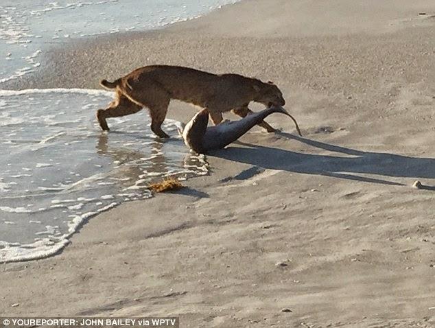 Miami Beach Feeding Cats