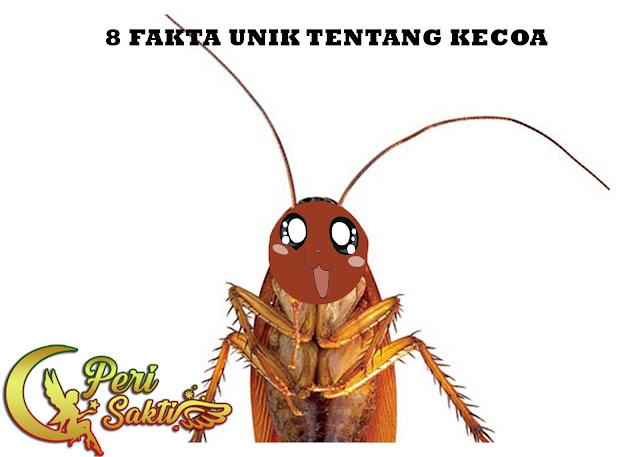 8 Fakta Unik Tentang Kecoa