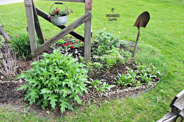 Newly Planted Junk Garden organizedclutter.net