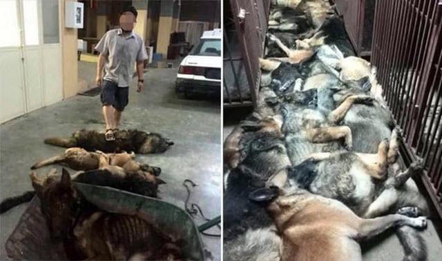 Cruelty Free Dog Food Canada