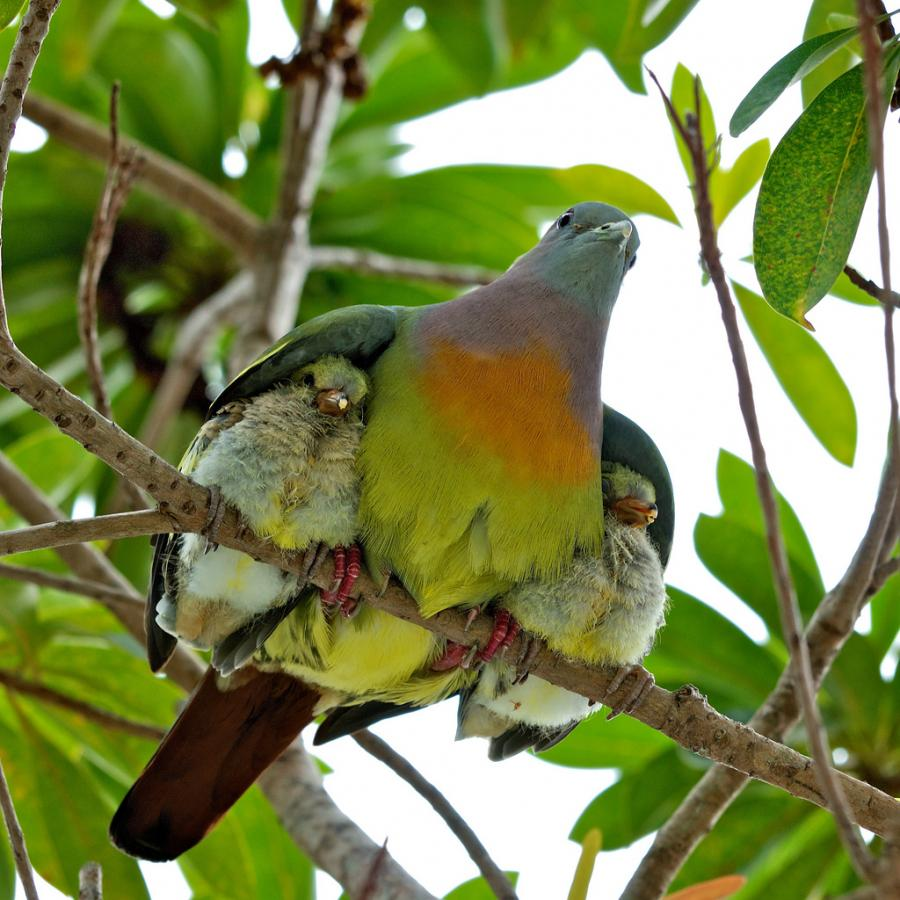 Image showing mother bird's love for it's young.